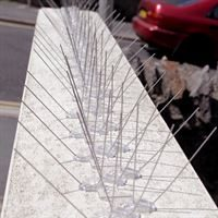 Extra Wide Stainless Steel Bird Control Spikes - Keeping Pigeons off Ledges
