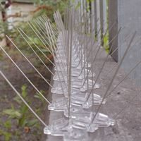 Extra Wide Stainless Steel Bird Control Spikes - Installed on Ledge