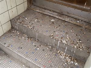 Pigeon and Bird Droppings - How to safely remove them!