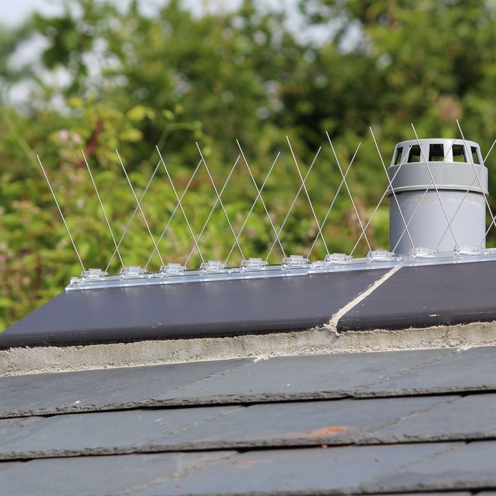 Defender Ridge Spikes to pigeons perching on roof tiles